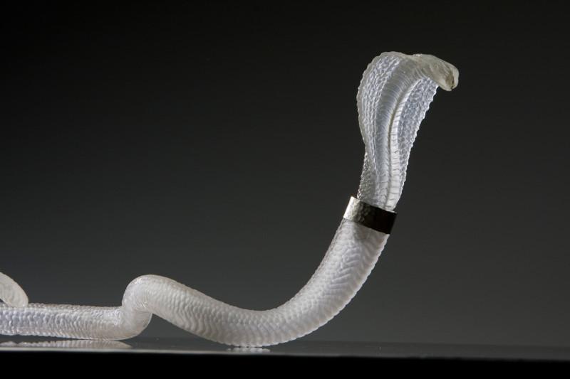 serpent-antoinebrodin-cerfav